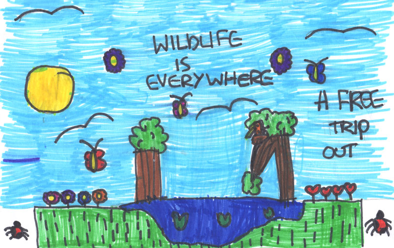 Colour felt tip drawing of a scene at Siddick Ponds with a blue sky and two trees. The slogan says: Wildlife is everywhere