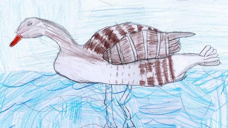 !-Greylag-Goose-Anon-Wildlife-Explorers