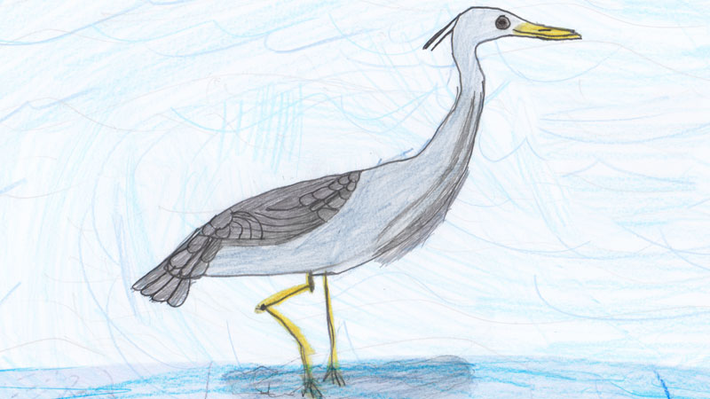 Colour drawing of a grey heron by Lucy from team Siddick Ducks